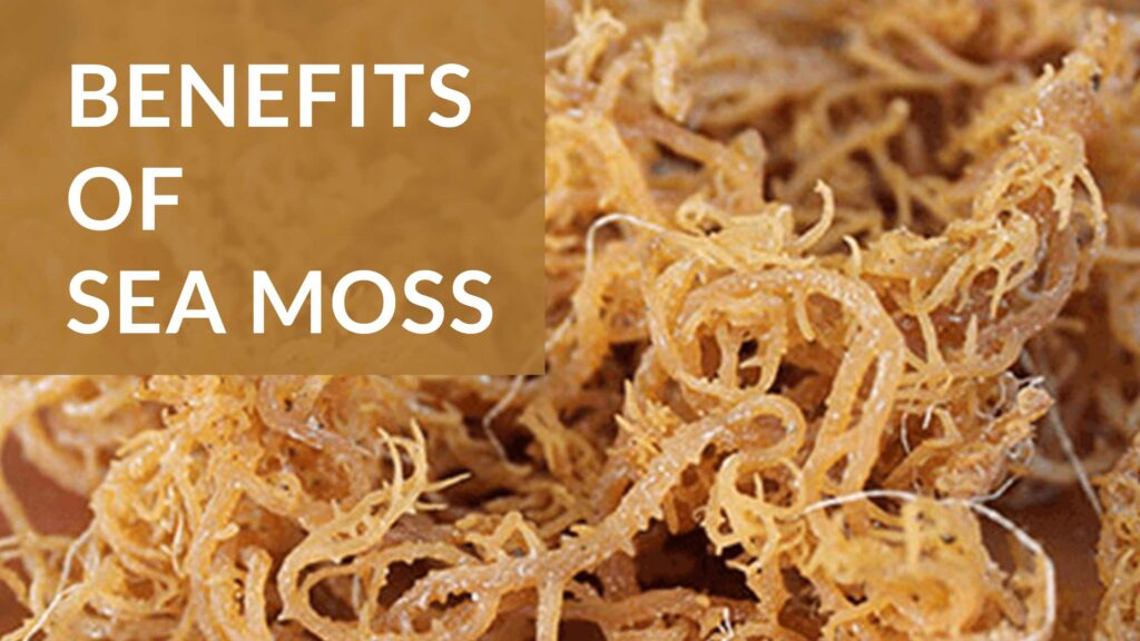 Benefits-of-sea moss