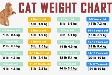 cat-weight-chart-by-age-in-kg