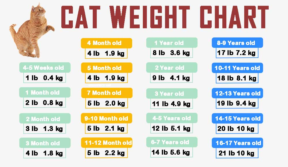 cat-weight-chart-by-age in kg