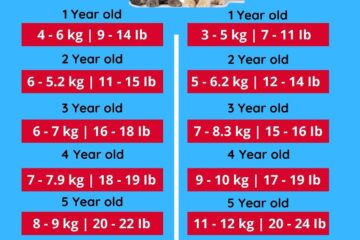 Male and female persian cat weight chart in kg ib