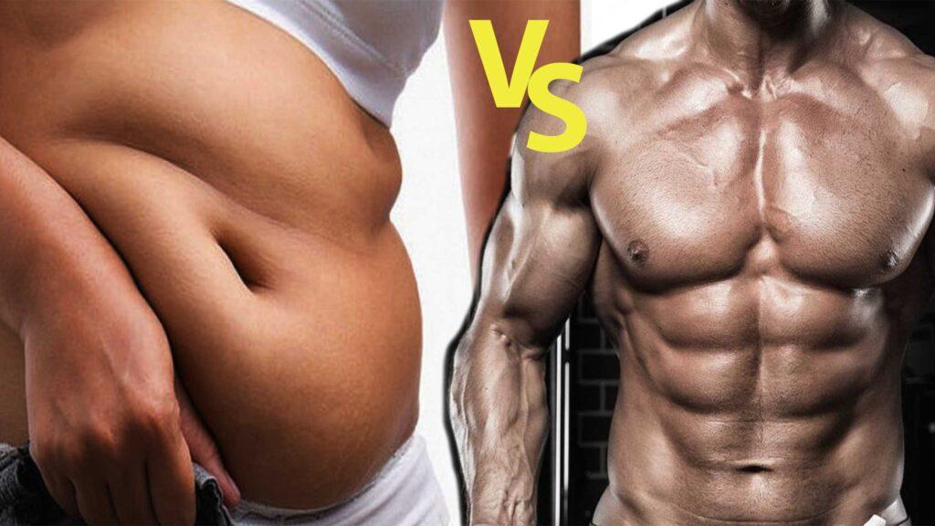 fat vs muscles